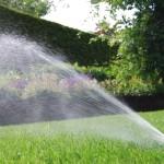 blog; tuin in maart (3)