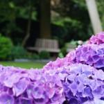 blog; hortensia's (4)